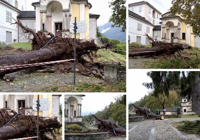 calvario albero alluvione ott 20 mix