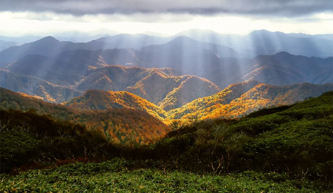 foresta alba vista