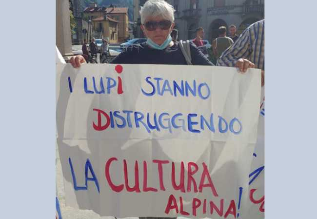 lupi cartello distruggendo