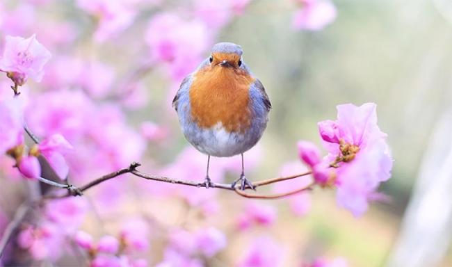 primavera uccello fiori